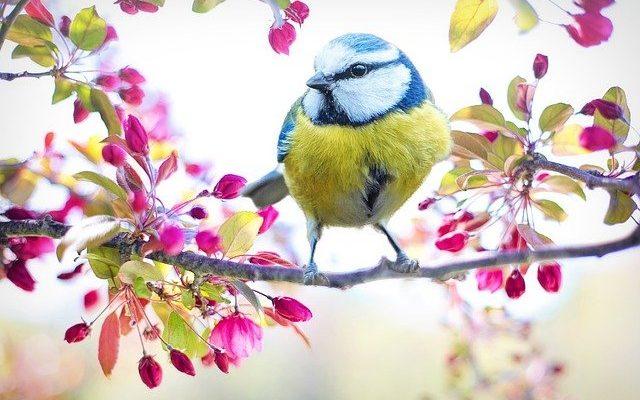 پرنده آبی چارلز بوکوفسکی